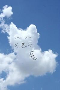 เมฆแมวกวัก-เดย์