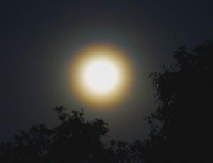 Moon_Corona-2011Mar19-Buncha-800x615