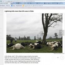 News : Lightning kills animals