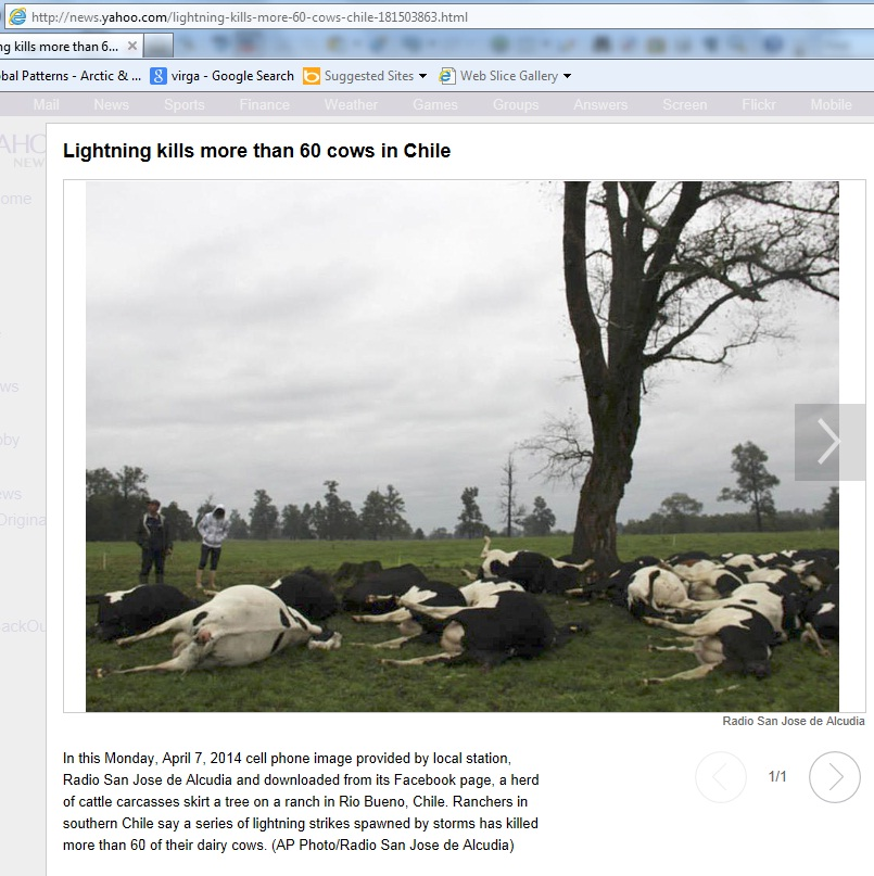 News-Lightning_kills_more_than_60_cows_in_Chile